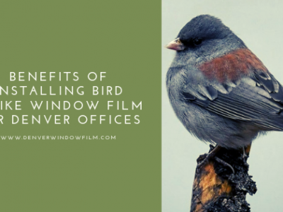 bird strike window film denver