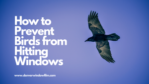 prevent birds from hitting windows denver