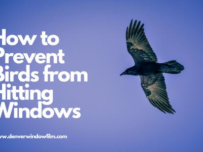 prevent birds from hitting windows denver